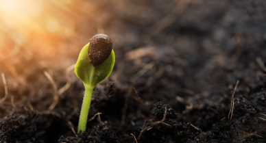 Biblical Truth : You need to grow